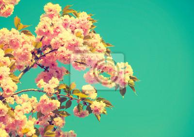 Wiosna kwiat. Piękna przyroda sceny z kwitnącego drzewa