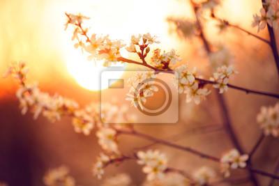 Wiosna kwiat tła. Piękna przyroda sceny z kwitnące drzewa i flary słońca