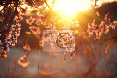 Wiosna kwiat tła. Piękna przyroda sceny z kwitnące drzewa i słońce flary. Słoneczny dzień. Wiosenne kwiaty