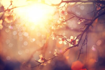 Wiosna kwiat tła. Piękna scena z kwitnącego drzewa