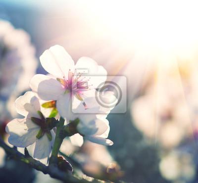 Wiosna kwiat tła. Przyroda scena z drzewa kwitnące