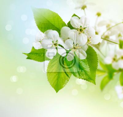 Wiosna kwiat wiśni na niewyraźne tło