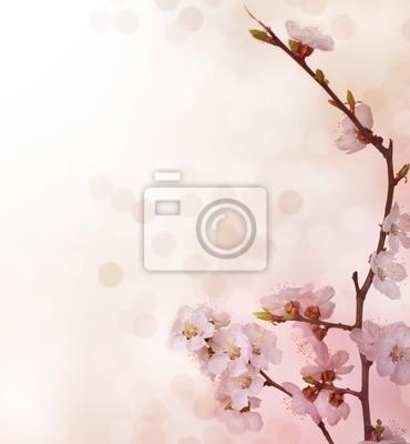 Wiosna Kwiatów border
