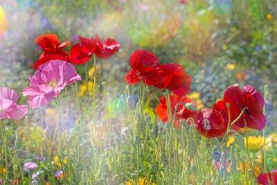 Naklejka wiosna łąka z czerwonych maków