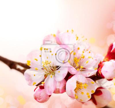 Wiosna w rozkwicie. Morelowe Kwiaty Border Art Design