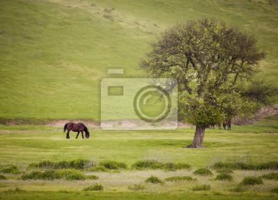 wiosnę krajobraz z drzewa koń i zielona trawa w godzinach porannych