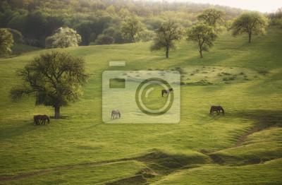 wiosnę krajobraz z konia i drzewa na wieczór