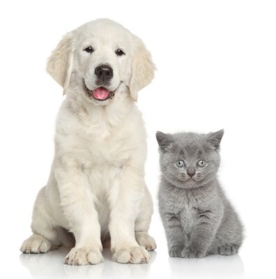 Naklejka Wraz z kotów i psów