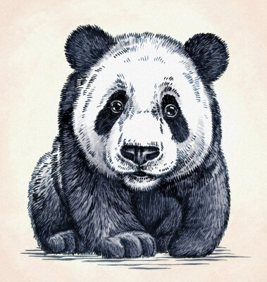 Naklejka wygrawerować atramentu rysować rysunek panda
