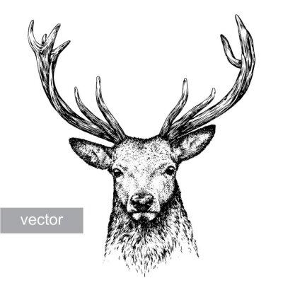 Naklejka wygrawerować Deer ilustracji
