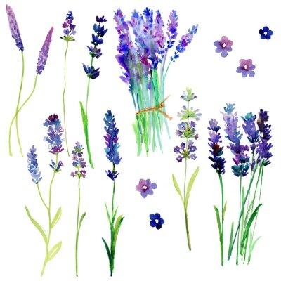 Naklejka Wyizolowane Provence kwiatów lawendy. Akwarela kwiatów ustawione dla swojego projektu.