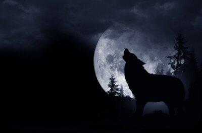 Naklejka Wyjący Wilk Tło