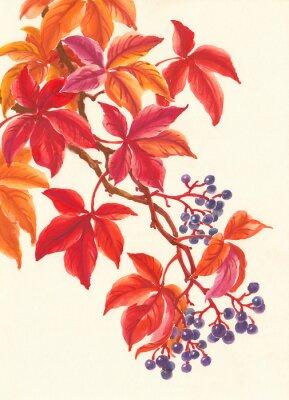 Naklejka Дикий виноград осенью, красные листья и ягоды, живопись.