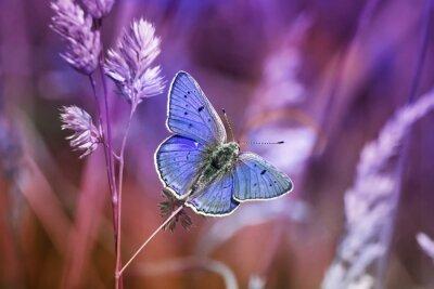Naklejka маленькая бабочка среди травы в сиреневых тонах
