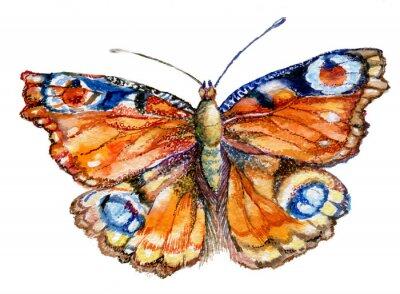 Naklejka бабочка акварель, графика, насекомое, рисунок,