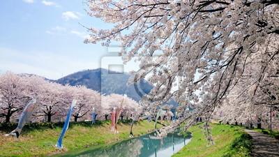 桜 と 鯉 の ぼ り
