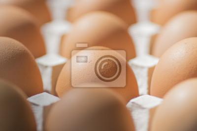 新鮮 な 卵