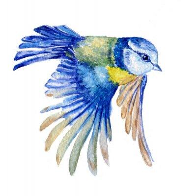 Naklejka птица синица
