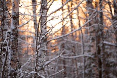 Naklejka Берёзовый лес