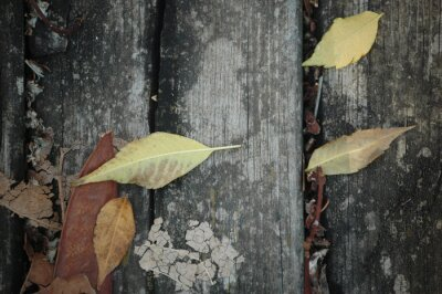 Yellowed dry autumn leaf on the wooden bench in the autumn park