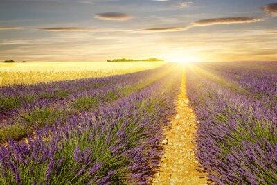 Naklejka Zachód słońca nad polami lawendy i pszenicy