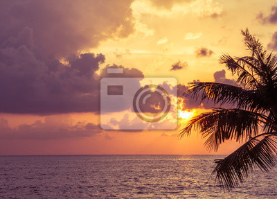 Zachód słońca, pomarańczowe niebo z chmurami i listkami sylwetka kokosowymi