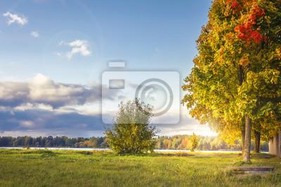 Zadziwiający jesień krajobraz w kolorowym parku w pogodnym wieczór. Barwioni drzewa i waniliowy niebo w Październiku. Spadek. Idealny dzień w parku jesienią. Kolor żółty opuszcza na drzewie w zielonej