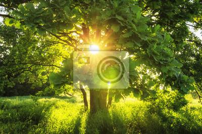 Zakończenie widoku sunbeams przez zielonych gałąź wielki drzewo na lato pogodnym ranku. Lato tło natury. Piękne ciepłe promienie słońca. liście świecą w słońcu w pogodny dzień. Naturalny krajobraz.