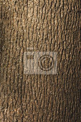 Naklejka Zamknij się teksturowanej brązowy kory drzewa