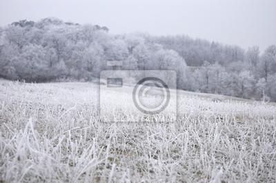 zamrożone przyrodzie na chłodne zimowe z lodu na trawie