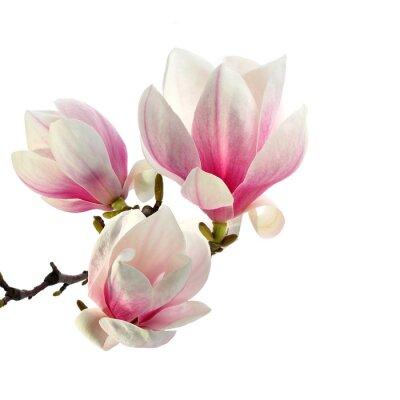 Naklejka zapach magnolii