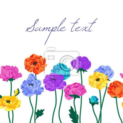 zawilec, tło, kolorowe, lato, kwiatowy