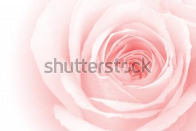 Naklejka zbliżenie kolorowe płatki róż na tle