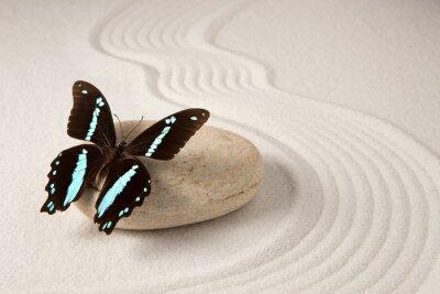 Naklejka Zen motyl