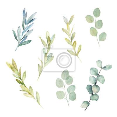 Zestaw akwarela zieleni. Botaniczna zimy ilustracja z eukaliptusową gałąź. Vintage ręcznie rysowane roślin