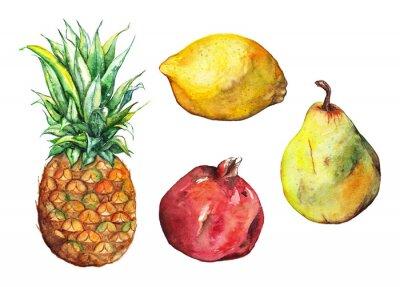 Naklejka Zestaw akwareli ananas cytryny granatu gruszka pojedyncze owoce
