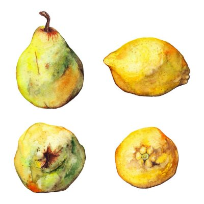 Naklejka Zestaw akwareli cytrusy cytryna gruszka pojedyncze owoce