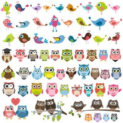 Naklejka zestaw cartoon kolorowych ptaków i sowy