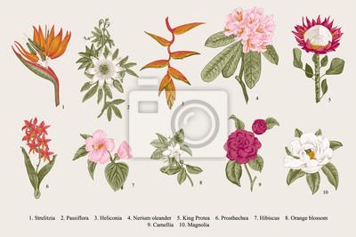 zestaw egzotyczne kwiaty. Wektor Botaniczny vintage, ilustracji. Elementy konstrukcyjne. Kolorowy.