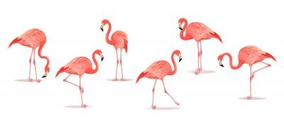 Naklejka Zestaw egzotycznych flamingów na białym tle. Ręcznie rysowane akwarela ilustracja.