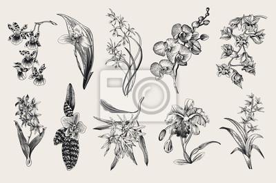 Zestaw egzotycznych orchidei. Wektor Botaniczny vintage, ilustracji. Elementy konstrukcyjne. Czarny i biały