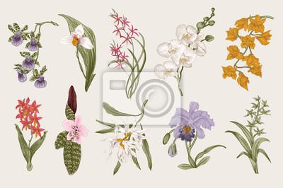 Zestaw egzotycznych orchidei. Wektor Botaniczny vintage, ilustracji. Elementy konstrukcyjne. Kolorowy.