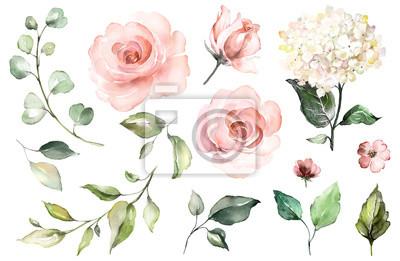 Zestaw elementów akwarela róż, hortensja. Kolekcja różowy kwiaty, liście, gałęzie, ilustracja botaniczna na białym tle. pączek kwiatów
