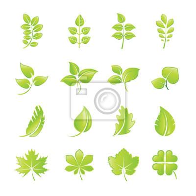 Zestaw ikon zielony liść
