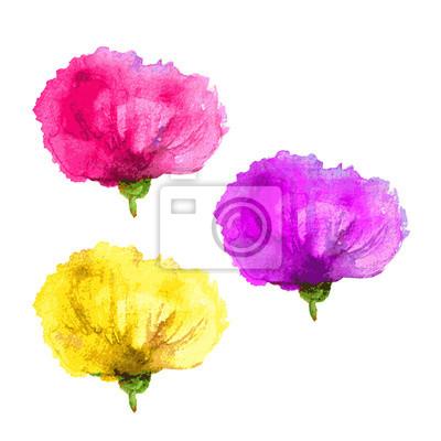 Naklejka Zestaw kwiatu maku - żółty, różowy, fioletowy. Akwarele ilustracji samodzielnie na białym tle. Kwiatowe elementy konstrukcji wektora.