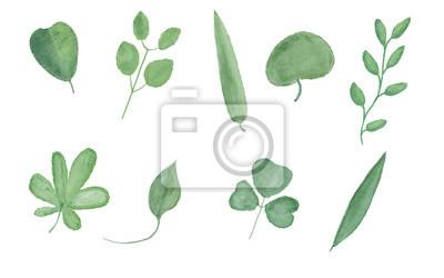 Zestaw liści akwarelowych. Malarstwo cyfrowe.