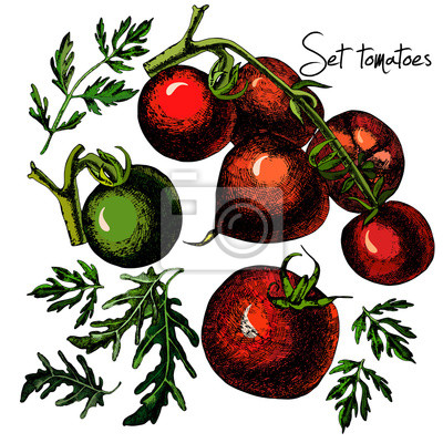 Zestaw ręcznie rysowane pomidorów samodzielnie na białym tle