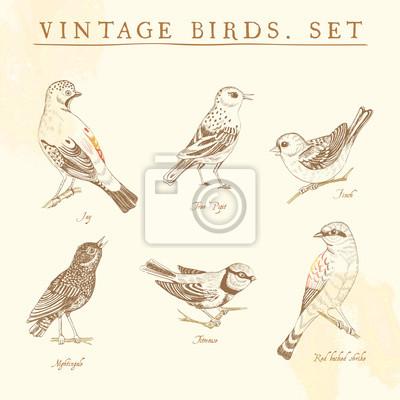 Zestaw starych ptaków. Beż i brąz