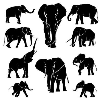 Naklejka Zestaw sylwetki słonia