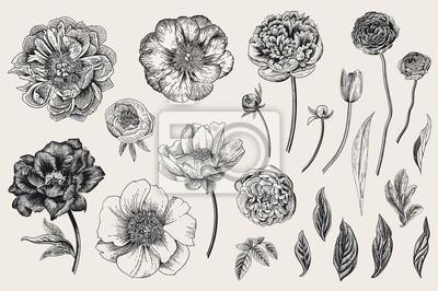 Zestaw. Wiosenne kwiaty. Piwonie, tulipan, ranunculus, róża. Ilustracja wektorowa botaniczny rocznika. Czarny i biały